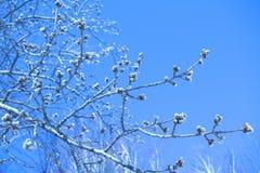 分支与芽以天空为背景 免版税图库摄影
