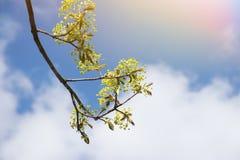 分支与绿色与云彩和阳光的花美丽的天空 免版税库存照片