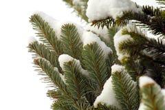 分支冷杉多雪的结构树 库存照片