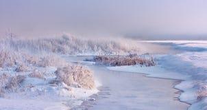 分支冷杉雪树型视图冬天 免版税库存图片