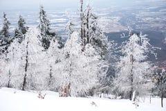 分支冷杉雪树型视图冬天 免版税库存照片