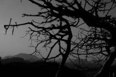分支剪影在山背景的  库存图片