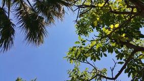 分支和叶子在蓝天 免版税库存照片