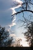 分支和天空在日落,垂直的看法 免版税库存照片