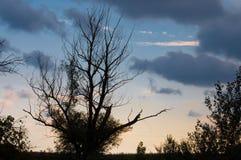 分支和天空在日落 库存照片