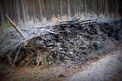 分支和木头在秋天森林里 免版税库存图片
