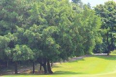 分支和树 旅行本质上 免版税库存照片