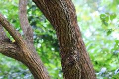 分支和树 旅行本质上 免版税库存图片