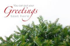 分支圣诞节多雪的结构树 库存照片