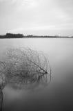 死分支在平静的湖 免版税图库摄影