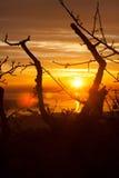 分支在日落在的里雅斯特,意大利 库存图片