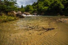分支在水库的岸在水中说谎 Shevelev 免版税库存照片