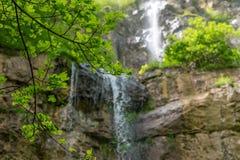 分支在瀑布的背景在一个晴天 库存照片