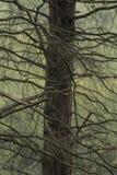 分支在萨里森林里 免版税图库摄影