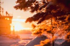 分支在雪和阳光 在的冬天日落 图库摄影