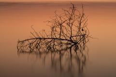 分支在水中,反射 美丽 免版税库存照片