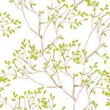 分支无缝的结构树墙纸 免版税库存照片