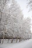 分支树冰雪 库存图片