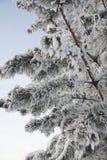 分支树冰雪 免版税图库摄影