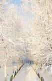 分支树冰雪 图库摄影