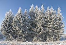 分支树冰 免版税图库摄影