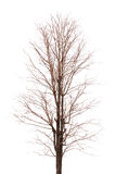 分支树被隔绝的图象 免版税库存照片
