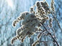 分支植物在阳光下 免版税库存图片