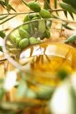 分支橄榄 库存照片