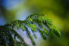 分支毛皮结构树年轻人 图库摄影