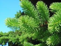 分支毛皮结构树 库存照片