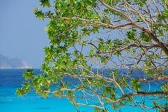 分支海运结构树 免版税库存照片