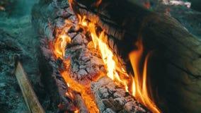 分支烧伤的篝火在森林移动式摄影车射击的 慢的行动 股票视频