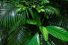 分支热带叶子晴朗的绿色饱和的背景 库存图片