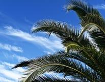 分支热带的棕榈树 免版税图库摄影