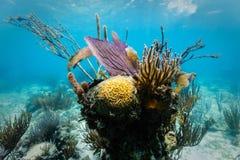 分支珊瑚、紫色海底扇和石珊瑚围拢的脑珊瑚头 免版税库存图片
