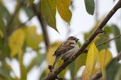 分支生锈的秋天的美丽的鸟 免版税库存照片