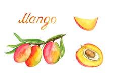 分支用成熟芒果结果实和叶子、裁减切片和一半与石头 库存例证