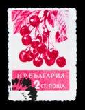 分支用莓果,李属avium,果子serie,大约1956年 库存照片