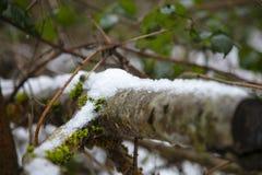 分支用雪层数包括 免版税库存图片