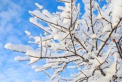 分支用霜霜盖的树 库存照片