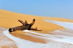分支由在一个热带海滩的波浪洗涤 库存照片