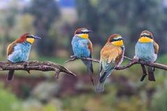 分支的狂放的色的鸟基于 免版税库存图片