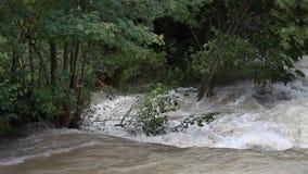 分支的看法在流动的河的中部的 影视素材