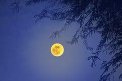 分支的阴影在满月夜 免版税库存图片
