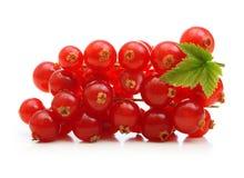 分支红浆果莓果 免版税库存图片