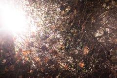 分支纹理与太阳的 春天 免版税库存照片
