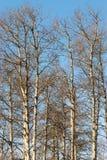 分支结构树冬天 库存照片