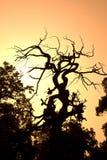 分支结构树 库存图片