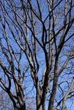 分支结构树 免版税图库摄影