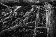 分支老结构树 免版税图库摄影